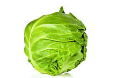 Young cabbage Stock Image