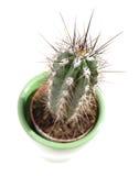 Young cactus stock photos