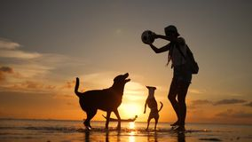 Young carefree girl playing with dogs at the beach during amazing sunset. Koh Phangan, Thailand. HD Slowmotion. stock video
