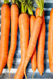 Young carrots Stock Photography