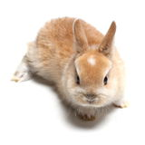 young carroty rabbit  on white Stock Photo