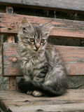 Young cat. Young grey cat is sitting Stock Photography