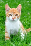 Young cat Stock Image