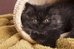 Young Cat Stock Photos