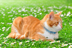 Young cat. In the grass Stock Image