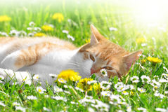 Young cat. In the grass Royalty Free Stock Photos