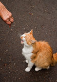 Young cat. A telephoto of a beautiful young cat Royalty Free Stock Photo