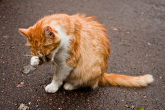 Young cat. A telephoto of a beautiful young cat Stock Photo