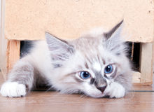 Young Cat Stock Photography