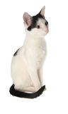Young cat. Black and white isolated royalty free stock photos