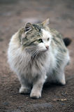 Young Cat! Royalty Free Stock Photo