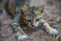 The young cat. Action of the young cat stock photography