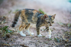 The young cat. Action of the young cat royalty free stock images