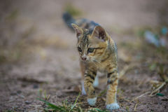 The young cat. Action of the young cat stock image