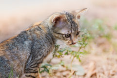 The young cat. Action of the young cat royalty free stock photos