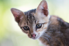 The young cat. Action of the young cat royalty free stock photo