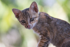 The young cat. Action of the young cat royalty free stock photography