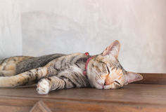 Young cat asleep at home Royalty Free Stock Photo
