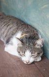 Young cat asleep at home Stock Photos