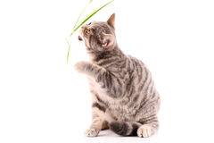 Young cat attack leaf isolated Royalty Free Stock Photos