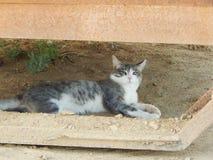 Young cat Royalty Free Stock Photos