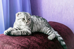 Young cat in bedroom Royalty Free Stock Photography