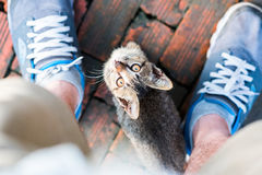 Young cat begging. A young cat looks up with asking eyes, staying between trainers on brick ground. Kitten asks a human food royalty free stock photos
