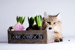 Young cat behind the flower Royalty Free Stock Photography
