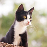 Young cat (25). Young cat, black and white, square Stock Image