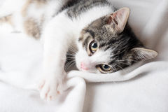 Young cat on blanket stock images