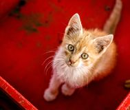 Young cat in box. Close up Royalty Free Stock Photography