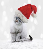 Young Cat In A Christmas Hat Stock Photography