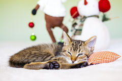 Young cat in a Christmas setting Royalty Free Stock Image