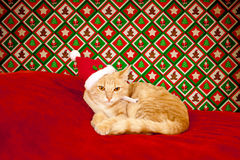 Young cat in a Christmas setting Stock Images