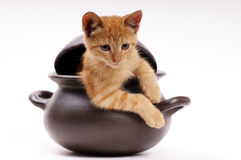 Young cat into a clay pan Stock Images