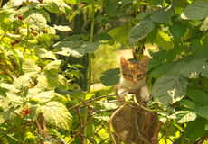Young cat climbing on the old stake. In garden Royalty Free Stock Images