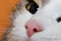 Young cat close up. Portret Stock Photography
