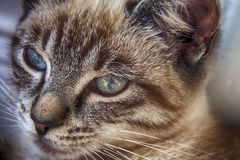 Young cat close-up, portrait photo, Reflection in the kitty eyes stock images