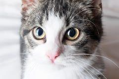 Young cat closeup royalty free stock images
