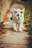 A young cat is coming in the house stock images