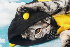 Young cat in costume bee Stock Image