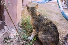 Young cat eating small plant outdoor Stock Photo