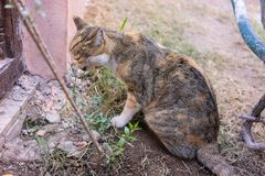 Young cat eating small plant outdoor Royalty Free Stock Photography