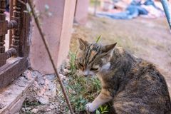 Young cat eating small plant outdoor Royalty Free Stock Photos