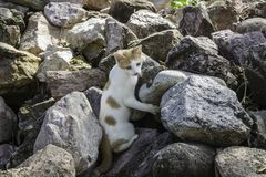 Young cat exploring a large pile of rocks in Puerto Vallarta, Mexico stock photo