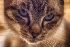 Young Cat Eyes stock images