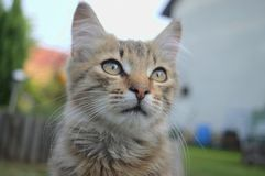 Young cat in the garden. Beautiful kitty sits in the garden Royalty Free Stock Image