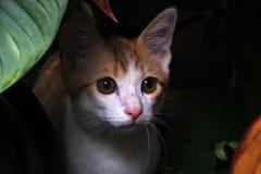 Cat in the garden Stock Photo