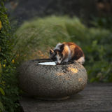 Young cat in the garden drinking water from a stone Stock Images