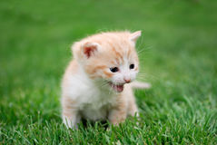 Young cat in the grass Royalty Free Stock Images